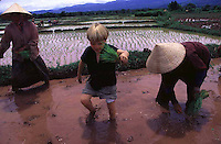 Tunui helping Yao women plant rice in northern Laos
