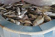 Pescado piña, mojarra y palmilla a la venta en la Cooperativa de Pescadores Rosita en  Puerto Vallarta.