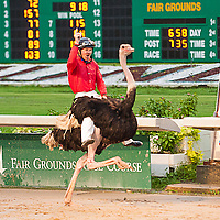 Fairgrounds Ostrich & Camel Race