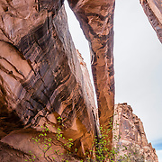 Hike Negro Bill Canyon to Morning Glory Bridge, on BLM federal land near Moab, Utah, USA. The Navajo Sandstone of Morning Glory Natural Bridge spans 243 feet, making it the sixth largest rock span in the United States. This panorama was stitched from 7 overlapping photos.