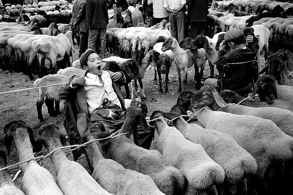 Xinjiiang Uygur Autonomous region. Kashgar. Sunday market livestock section, used to be part of the Silk Road 2000.