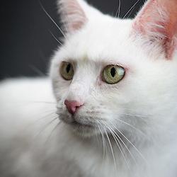 Betty White - Cat