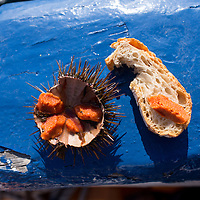 Sea urchin (garotes in Spanish) are traditionally eaten with only a piece of bread. Llafranc, Costa Brava, Spain