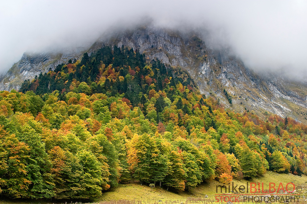 Mountain and forest in autumn.<br /> Plan dera Artiga and Malh dera Artiga mountain. Artiga de Lin. Aran Valley. Pyrenees mountain range. Lerida province.  Catalonia, Spain, Europe.