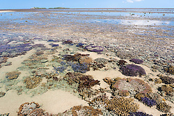 Colourful corals lie in a shallow pool on top of Montgomery Reef in the Camden Sound Marine Park.