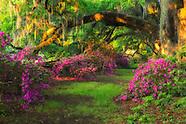 Magnolia Garden Sunrise