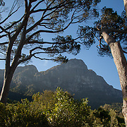 View of Table Mountain from Kirstenbosch Botanical Gardens, Cape Town, South Africa.