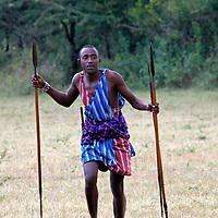 Africa, Kenya, Masai Mara. Maasai Warrior demonstrates hunting and archery skills for visitors to Cottar's 1920's safari Camp.