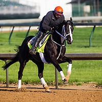 Black Onyx gallops in preparation for the Kentucky Derby at Churchill Downs in Louisville, KY on May 01, 2013. (Alex Evers/ Eclipse Sportswire)
