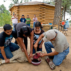April Nez gets a little help from Alvin Rafelito in slitting the throat of a sheep while Rico Pino and Aaron Celorio hold the animla down on Thursday in Pine Hill. The kids were participating in the Ramah Navajo Summer Youth Employment Program, which aims to teach youngsters various traditional skills.