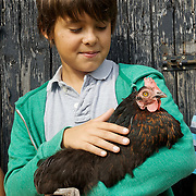 Edward, 12, holding &quot;Bat&quot; the chicken in the chicken run at Hares Farm. CREDIT: Vanessa Berberian for The Wall Street Journal<br /> UKFARM-Hares Farm