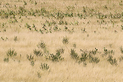 grasses and plants at the Bosque del Apache National Wildlife Refuge in New Mexico