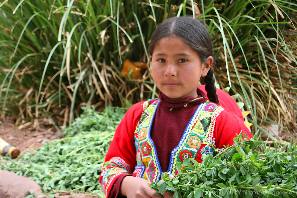 Americas, South America, Peru, Cusco. Young girl with greens for llamas at Awana Kancha breeding center.