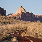Deer cross Kolob Terrace Road at entrance to Zion National Park, Springdale, Utah, USA. The North Fork of the Virgin River carved spectacular Zion Canyon through reddish and tan-colored Navajo Sandstone up to half a mile (800 m) deep and 15 miles (24 km) long. Uplift associated with the creation of the Colorado Plateaus lifted the region 10,000 feet (3000 m) starting 13 million years ago. Zion and Kolob canyon geology includes 9 formations covering 150 million years of mostly Mesozoic-aged sedimentation, from warm, shallow seas, streams, lakes, vast deserts, and dry near-shore environments. Mormons discovered the canyon in 1858 and settled in the early 1860s. U.S. President Taft declared it Mukuntuweap National Monument in 1909. In 1918, the name changed to Zion (an ancient Hebrew name for Jerusalem), which became a National Park in 1919. The Kolob section (a 1937 National Monument) was added to Zion National Park in 1956. Unusually diverse plants and animals congregate here where the Colorado Plateau, Great Basin, and Mojave Desert meet.