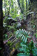 Guam NHP Limestone Forest Asan