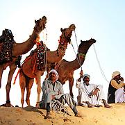 Bikaner_Camel_Festival
