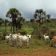 Savanna (cerrado) biome, Brazilian  Highlands, Goiás State, Brazil