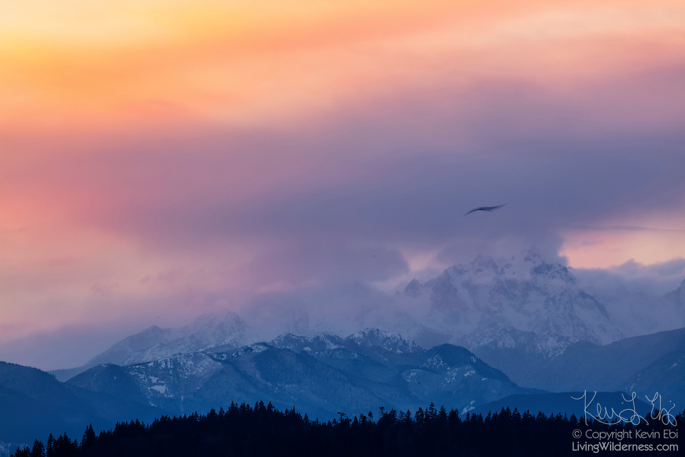 At sunset, a heavy winter storm drops fresh snow on Mount Constance, a 7756-foot (2364-meter) peak in the Olympic Mountain Range of Washington state.