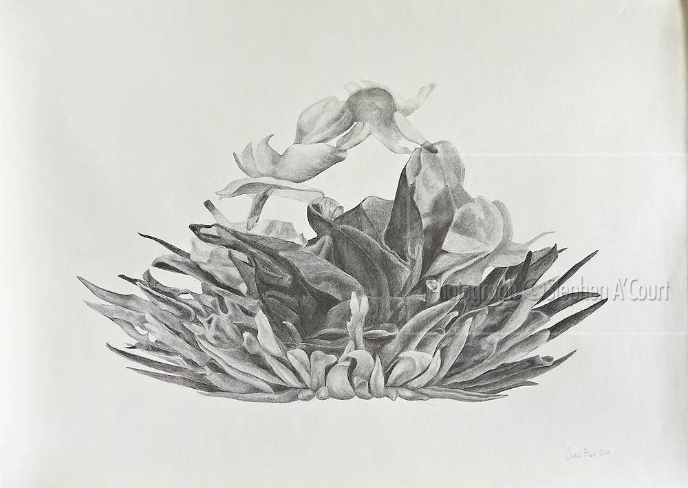 The work of Bowen Galleries' represented artist Jana Beer.