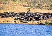 Battle at Kruger No. 19
