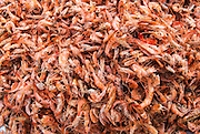 Sun-dried prawns at a market, Malindi, Kenya