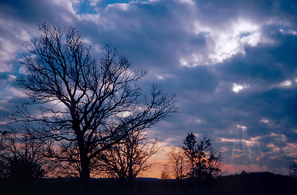 Oak tree in Sunset