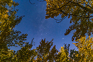 The autumn constellations of Cassiopeia (the W at lower centre) and Cepheus (at top) amid autumn aspens on a moonlit September evening. The Andromeda Galaxy, M31, is at lower right. I shot this from the Elbow Falls area in Kananaskis, Alberta. Illumination is from a waxing gibbous Moon.<br /> <br /> This is a single untracked 20-second exposure at f/2.5 with the 24mm lens and Nikon D750 at ISO 1000.