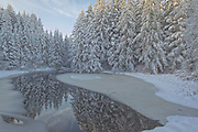 Alaskan Winter Wonderland scene on a side stream from Auke Lake to Auke Bay in Juneau, Alaska, snow covered Sitka spruce reflect in partial frozen stream leading
