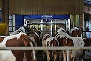 26/10/15 - SAINT PAULIEN - HAUTE LOIRE - FRANCE - Julien DUPLOMB, jeune eleveur de vaches laitieres. En prepa ecole d ingenieur agronome - Photo Jerome CHABANNE