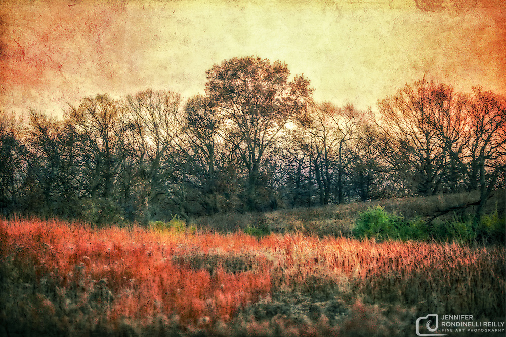 November sunset at Retzer Nature Center in Waukesha,WI.