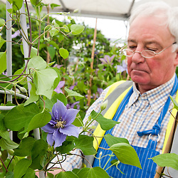 London, UK - 16 May 2013: Raymond Evison works on a plant of Clematis during the preparations for the RHS Chelsea Flower Show 2013 edition. He first attended the Chelsea Flower at the age of 16 and moved to Guernsey in 1984 to set up The Guernsey Clematis Nursery in 1984.