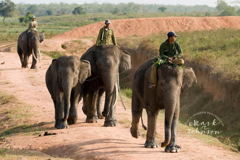 Men riding elephants, Way Jambas Elephant Park, Sumatra, Indonesia