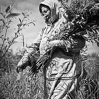 Vera Spein collects willow branches.  Subsistence activities near the village of Kethluk in southwest Alaska.
