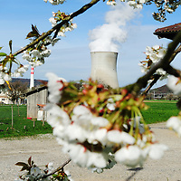 Spring blossom and Leibstadt nuclear power station, which stands close to the German border.<br /> The Swiss are due to vote shortly in a referendum whether to quit nuclear power, which via its five reactors, on four sites, provide almost 40% of the country's power