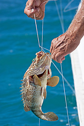 A cod is caught in a tangle of fishing lines.