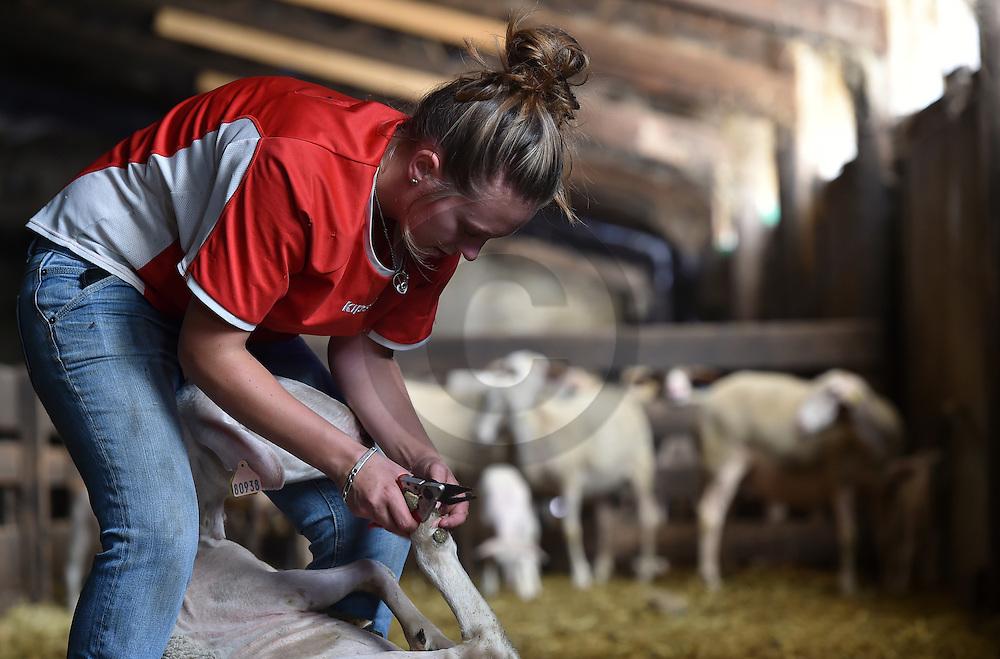 21/09/15 - SAUGUES - HAUTE LOIRE - FRANCE - Lea LEBRAT, jeune eleveuse de brebis et de vaches allaitantes limousines. En cours d installation - Photo Jerome CHABANNE