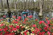 A couple paddles a boat through the blackwater bald cypress and tupelo swamp during spring at Cypress Garden April 9, 2014 in Moncks Corner, South Carolina.