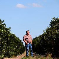 LAKE WALES, FL -- October 13, 2010 -- Citrus grower Marty McKenna poses for a portrait in one of his orange groves in Lake Wales, Fla., on Wednesday, October 13, 2010.  The housing bust left orange groves - which were scooped up by investors - unattended, overgrown and full with disease.  That disease is spreading to healthy, adjacent fields - leaving citrus growers scrambling to replant lost production...ORANGES