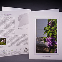 Although not native to the state, the purple lilac is NH's state flower.  Story about how it became significant to NH is highlighted on the back of the card. <br />