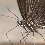 Arthropods of Thailand