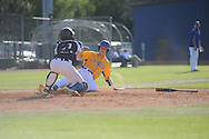 Oxford High's Jason Barber (7) scores on a squeeze play against Jackson Callaway catcher Alex Taylor (12) in MHSAA Class 5A playoff action in Oxford, Miss. on Friday, April 25, 2014.
