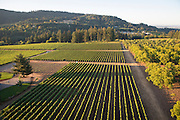 Anam Cara aerial view, Chehalem Mountains, Wilamette Valley, Oregon