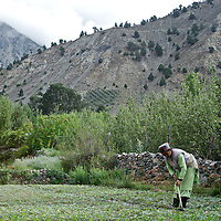A Kinnauri woman tends to the fields in the Ropa Valley of Himachal Pradesh, India