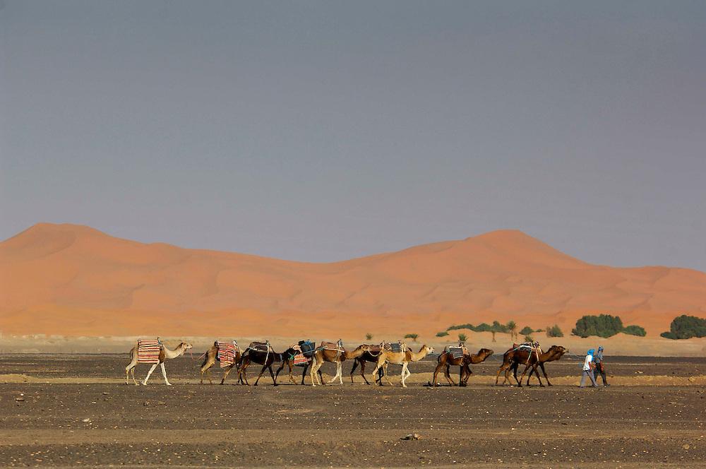 Camel caravan, Erg Chebbi Sand Dunes, near Merzouga, Morocco