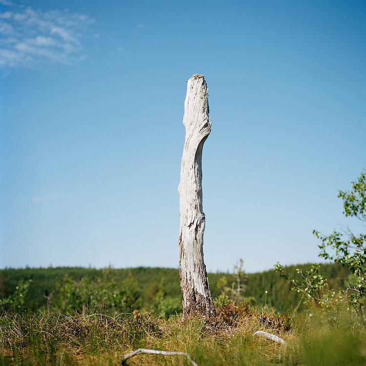 Stump at New York, Norway. . ..Photo by Knut Egil Wang /MOMENT