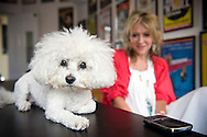 UK. London. Producer, Sonia Friedman with her dog, Teddy, in her office at the Duke of York's Theatre, in London's West End..Photo©Steve Forrest