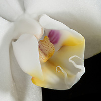Shoot/Week 07: Orchids