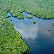Con más de 200,000 has de superficie, el bosque de mangle de Marismas Nacionales se considera el más extenso del Pacífico mexicano.