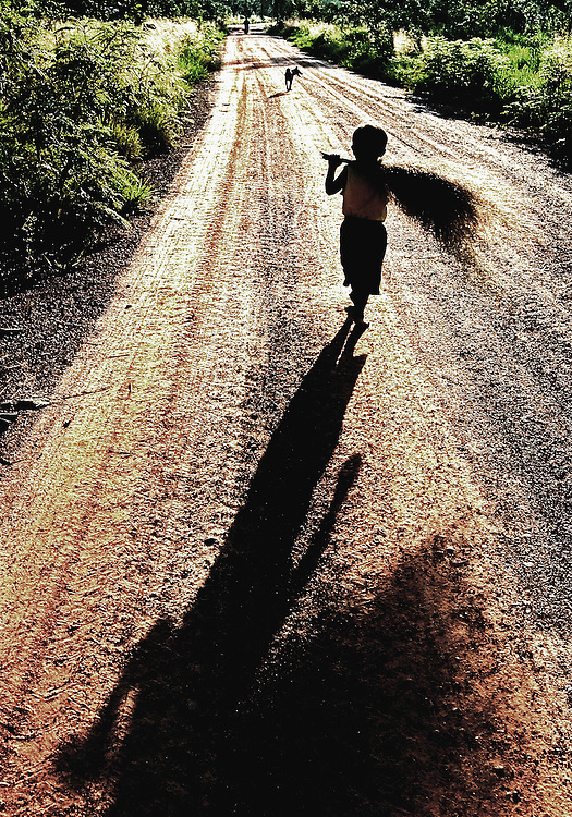 A boy walking home late in the afternoon in Savannakhet province, Laos with his harvest of grass to be made into a broom.