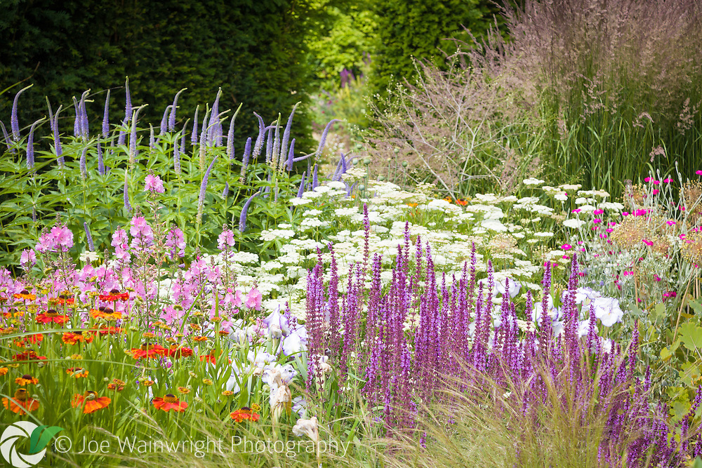 A lush herbaceous border including Veronicastrum virginicum 'Fascination', salvias, irises and heleniums.